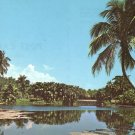 Lowland View of Fairchild Tropical Garden in Miami Florida FL Chrome Postcard - 5236
