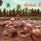 Flamingos at Hialeah Race Course in Florida FL 1956 Chrome Postcard - 5237