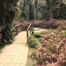 Foot Bridge in Florida FL Cypress Gardens Chrome Postcard - 5242