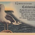 Greetings from California with Seagull, Mid Century Linen Postcard - 5314