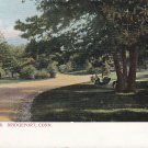 Beardsly Park Bridgeport Connecticut CT, Undivided Back Vintage Postcard - 5402