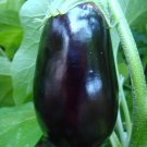 50 Black Beauty Eggplant Seeds