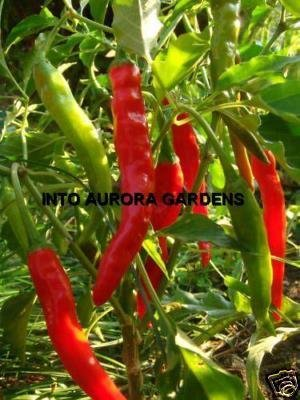 50 Long Hot Cayenne Pepper Organic Seeds Chile Chille