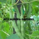 25 Green Garden Beans Kentucky Wonder Vegetable Seeds