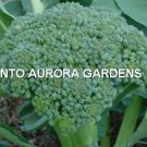 100 Broccoli Green Waltham 29 Organic Seeds