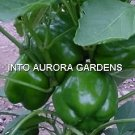 50 California Wonder Organic Sweet Bell Pepper Seeds