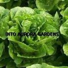 100 Huge Organic Romaine Heirloom Green Lettuce Seeds