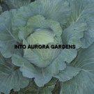 100 Premium Late Flat Dutch Heirloom Cabbage Seeds
