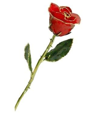 Rose - 24Kt Gold - Red