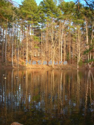 Tree Reflection 11x14