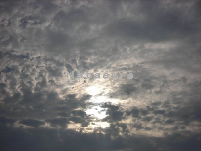 Peeking Sun 11x14