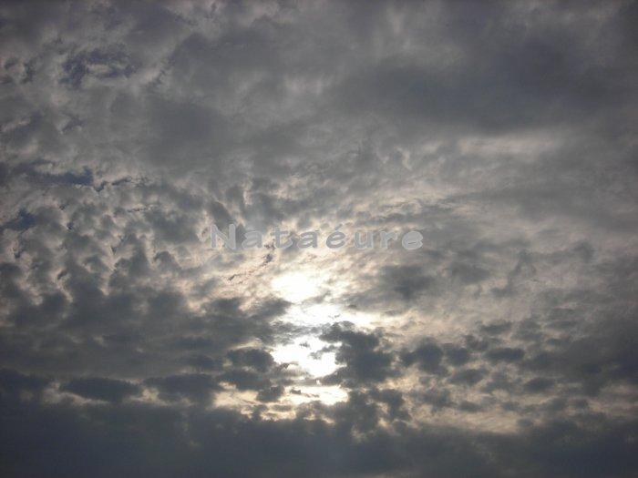 Peeking Sun 8x10