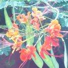 Exotic Orange 16x20