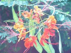 Exotic Orange 11x14