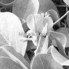 Flowerbud Macro 11x14