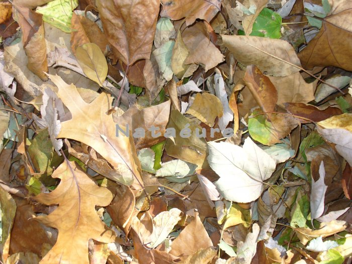 Fall Leaves 16x20