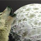 WOLF HOWL UNDER MOON