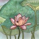 Lotus-8 box set