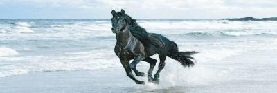 Black Horse on beach