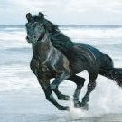 Black Horse on beach