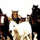 Horses running 2