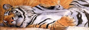 Perforated Tiger Sleeping Rear Window Graphic