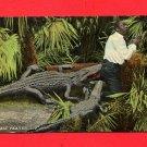 Vintage Postcard - Black Americana - 2 Alligators attacking man B1