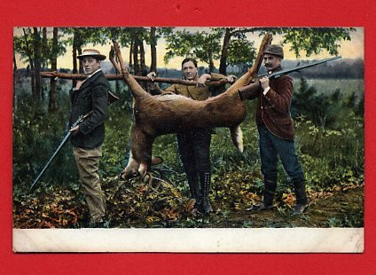 Vintage Postcard - 3 Male men Hunters bagged a Deer & carrying it home 427