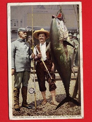 Vintage Postcard - 2 fishermen caught a really BIG Tuna 441