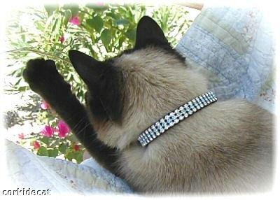 OSFA Black Diamond *Bling* Cat collar