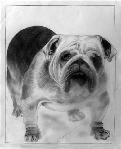 "The Bulldog (5""x7""/8""x10"")"
