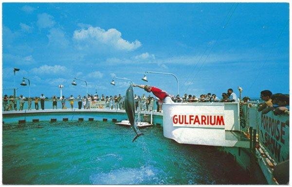 Performing Porpoises, Gulfarium, Ft. Walton Beach, FL