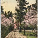 Sand Hills in Springtime, Southern Pines, NC c1910s PC