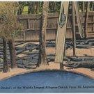 Alligator-Ostrich Farm, St. Augustine, FL Postcard