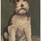 Wire-haired Fox Terrier, signed D Carr, c1950s Postcard