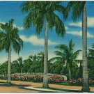 Las Olas Boulevard, Ft. Lauderdale, FL Postcard