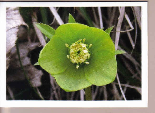 Unique Green Flower Thinking-of-you Card
