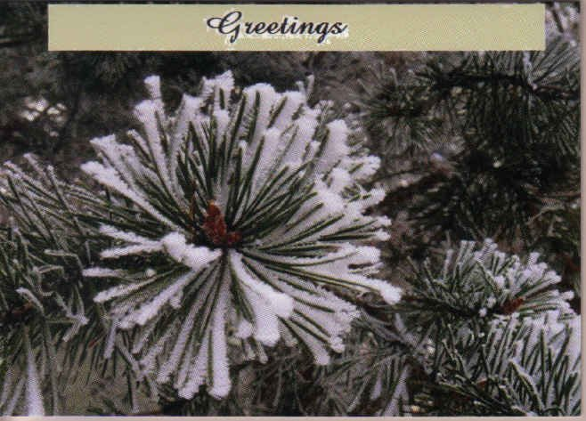 Pine and Snow Greeting Card