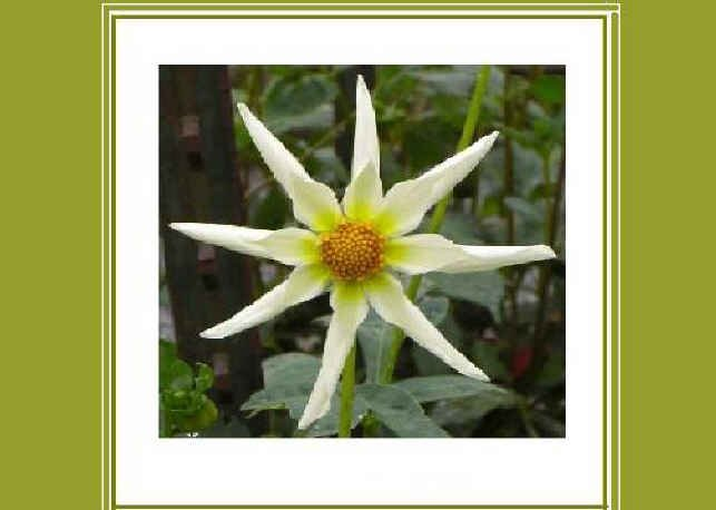 Unique Stary Flower Thinking-of-You Greeting Card