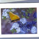 Handpainted Yellow Butterfly and Blue Flowers Greeting Cards