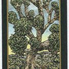 Doral 2006 Card Americas Backyard #7 Joshua Tree