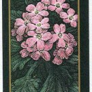 Doral 2006 Card Americas Backyard #14 Pink Sand Verbena