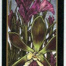 Doral 2006 Card Americas Backyard #21 Butterfly Orchid