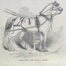 HORSE HARNESS IVORY DINSDALE SADDLERY LONDON 1852 AD