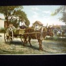 Early 1900s Southern Ox Cart Black Male Driver Postcard