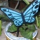 Blue Butterfly Plant Poke