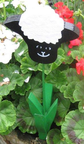 Black Sheep garden flower wood