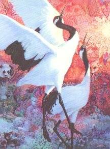 """Manchurian Crane"""