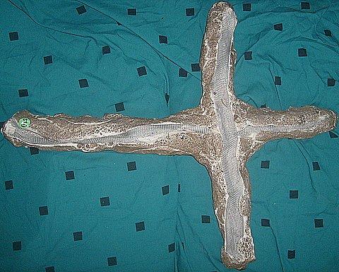 plaster cross