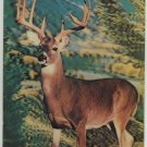 Vintage 3 D Collector Series Big Buck Postcard Post card Visual Panographics INC